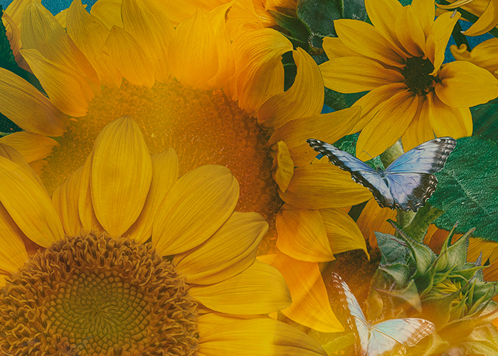 DETAIL-sunflower-blowing-in-the-wind