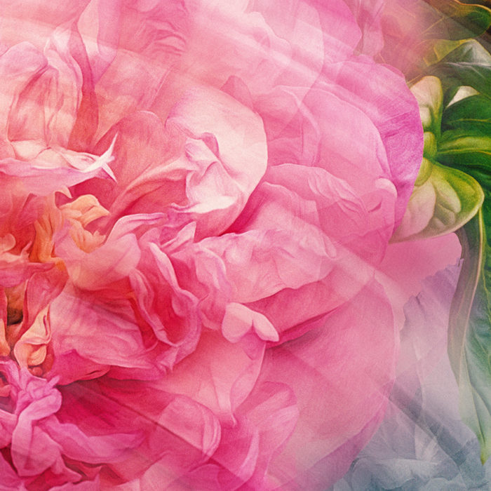 DETAILAbstract-peony--130x130-Mergred-layers-